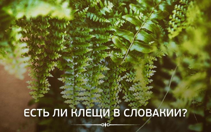 Есть ли в лесах Словакии клещи?